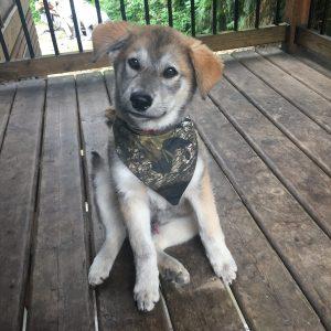 Camouflage dog bandana