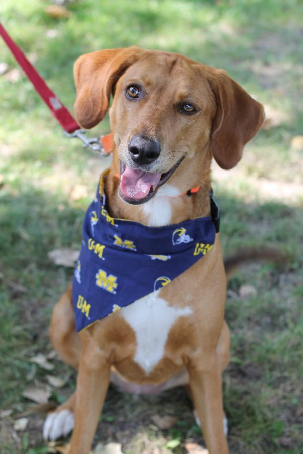 Michigan Wolverines Bandana